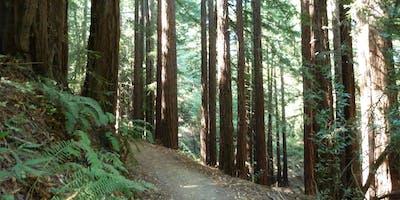 Roving Oakland's Redwoods