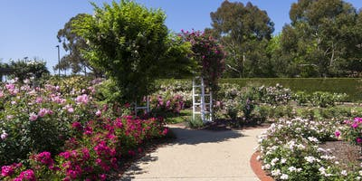 Heritage Festival - Caring for this space - The Rose Gardens