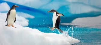 South America & Antarctica Travel Information
