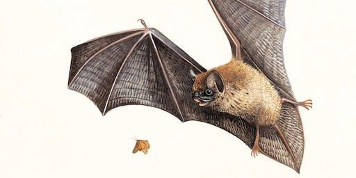 Bat Walks at Sherwood Forest