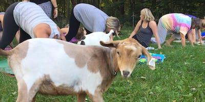 7/20 Saturday Evening Goat Yoga