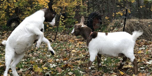 10/5 Fall Goat Yoga