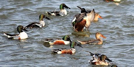 CANCELLED - DNR Spring Birding Tour: Shiawassee River SGA tickets