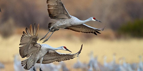 CANCELLED - DNR Spring Birding Tour: Muskegon County Wastewater System tickets