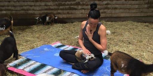 Moon Shadow Goat Yoga