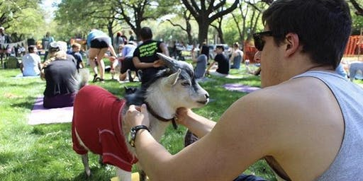 Red, White, and Baaaaaahlue! Goat Yoga Richardson!