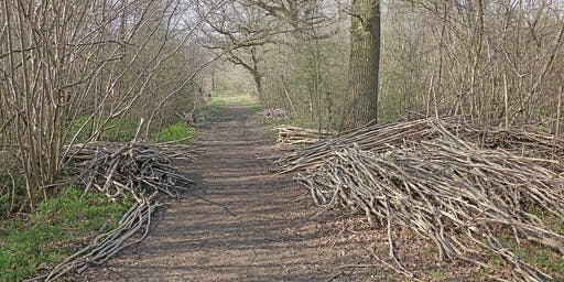 Woodland Management at Bradfield Woods (EWC2806)