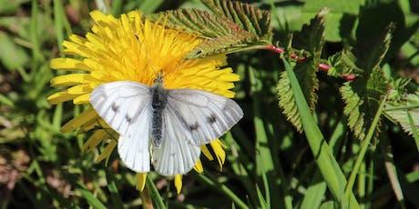 Butterflies tickets