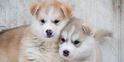 Canine Assisted Intervention Workshop
