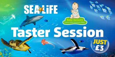 Taster Session: Baby Sensory at the National SEA LIFE Centre