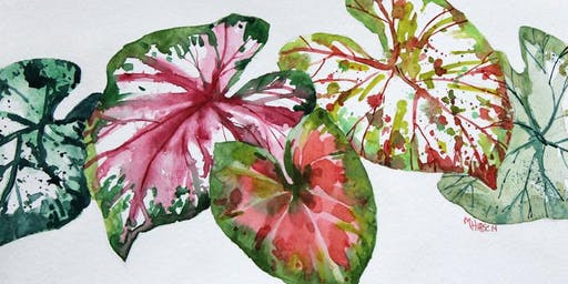 Watercolor Workshop: Colorful Caladiums