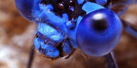 IJAMS FARRAGUT PROGRAM: Insect Safari tickets