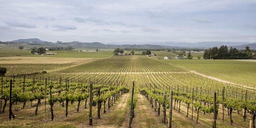 Vineyard Lunch - Red Winery Vineyard