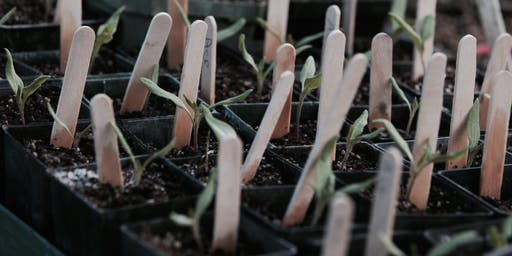 Organic Gardening Basics - Propagation and planting