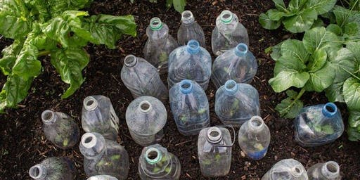 Organic Gardening Basics - Natural pest control
