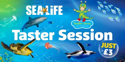 Taster Session: Toddler Sense at the National SEA LIFE Centre