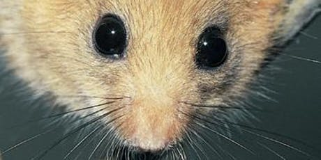 Ecology and Conservation Workshop for Dormice tickets