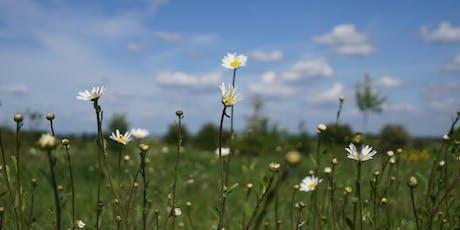 Butterflies & Chalk Grassland tickets