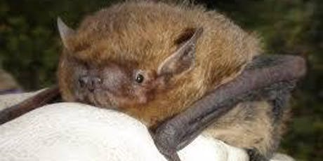 Intro to British Bats; Ecology & Conservation tickets