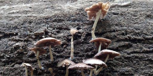 IJAMS FARRAGUT PROGRAM: Fun Fungi