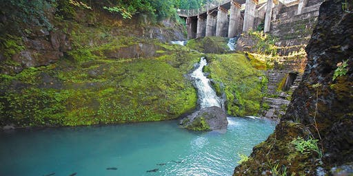 Freedom! The Elwha River Five Years Later