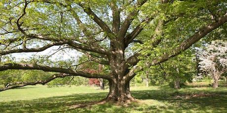 Big Tree Hike tickets