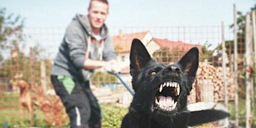 Dog Aggression and Reactivity Seminar