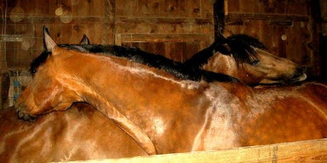 Holistic Horse Care Workshop tickets