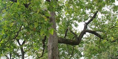 Tree ID Walk: Allegheny Commons 2019