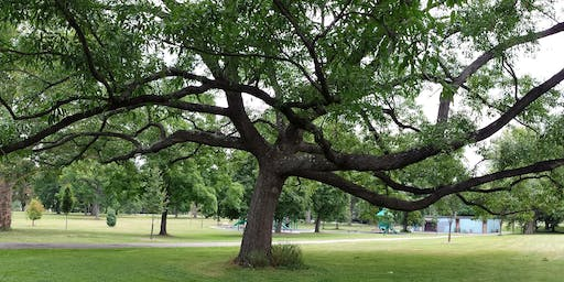 Tree ID Walk: Westinghouse Park 2019