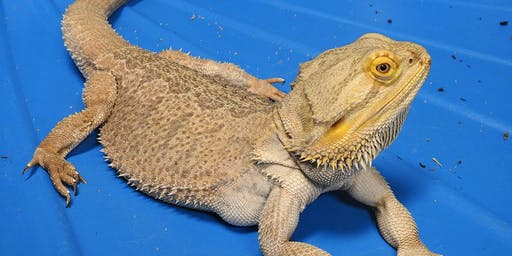 Reptile Research One Day Class