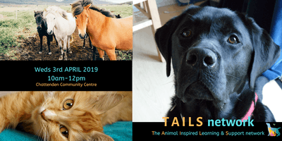 TAILS network (launch event)