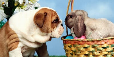 Pet Treats with the Easter Bunny at the Spring Fling