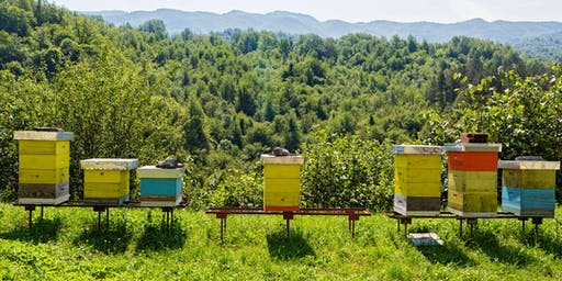 July - Introduction to Beekeeping Class at The Bee Store