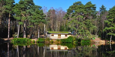 Forest Bathing & Nature Therapy - New Forest Retreat with Yoga, Mindfulness, Cacao, Gong & Tibetan Bowls
