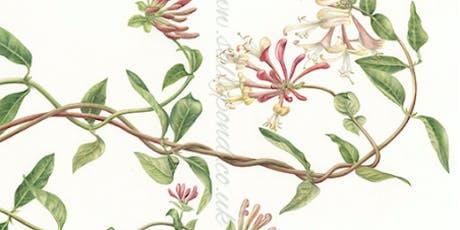 Botanical Illustrations tickets