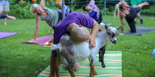 Father's Day Goat Yoga In The Woods