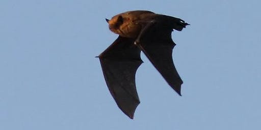 Bat Walk at Cromer's wood with Alison Ruyter