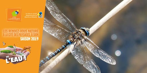 Sortie nature: Fascinantes libellules.