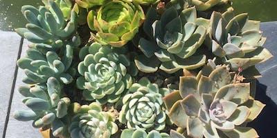 Cacti and Succulent Masterclass