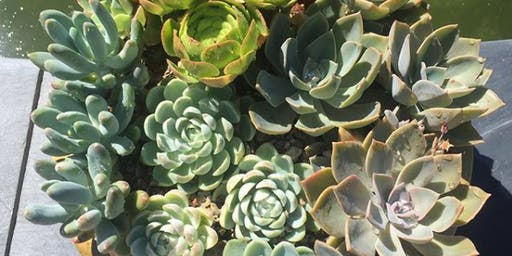 Cacti and Succulent Masterclass