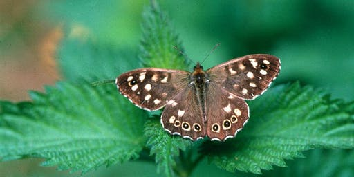 Moths and Butterflies of Cromer's Wood with Alison Ruyter