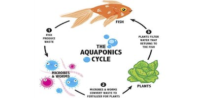 Into+to+Aquaponics+with+Oko+Farms%3A+Class+1+%28S