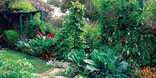 Designing & Planting a Food Forest