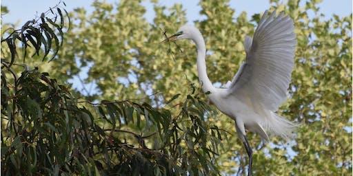 Bird Courtship and Breeding Strategies: Bird Walk with Lisa Hug