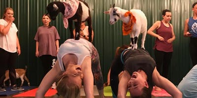 Indoor Goat Yoga by Shenanigoats with Brianne