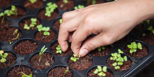 Intensive Urban Farming with Hendricka Kwan