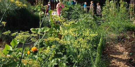 Garden weeds: Food, medicine & fertiliser tickets