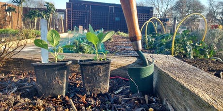 Growing autumn and winter veg tickets