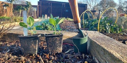 Growing autumn and winter veg